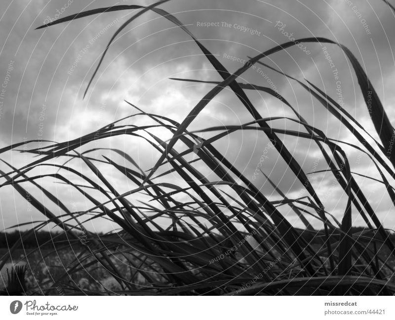 stormy field Sturm Feld Wiese Gras Wolken grau Unwetter Ebene Leidenschaft Schwarzweißfoto Natur Landschaft Pflanze