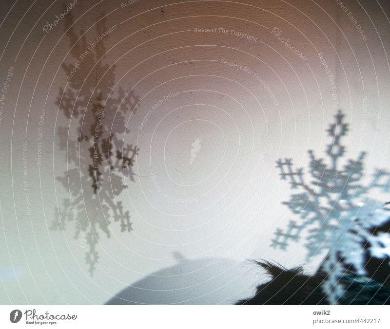 Noch drei Monate Vorfreude Dekoration & Verzierung Weihnachten Schmuck Innenaufnahme Weihnachtsdekoration Weihnachten & Advent Fensterscheibe Ornamente hängen