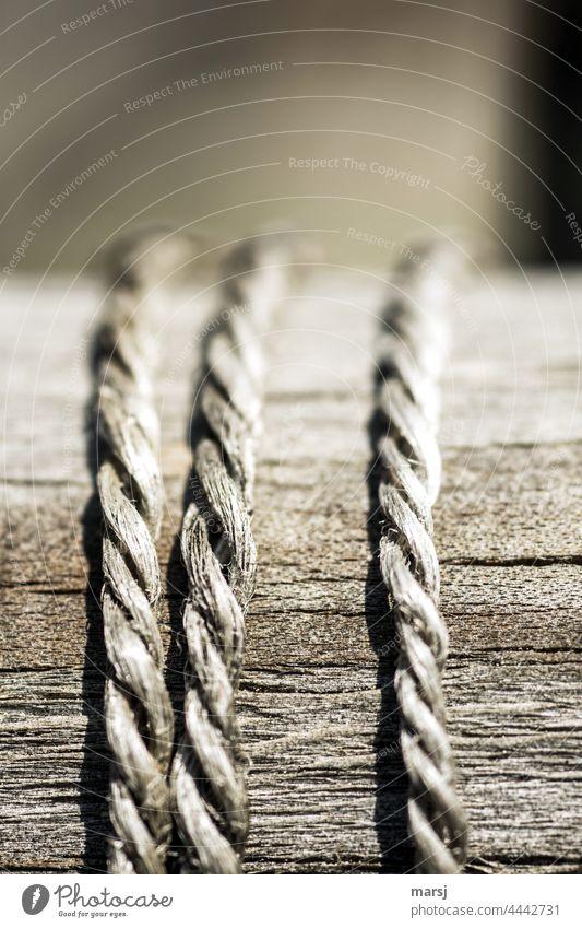 3 Hanfschnüre auf Holz, die gemeinsam alt wurden. Zwei liegen Nebeneinander und die Dritte ist ein Aussenseiter. Hanfschnur Schnur verwittert miteinander Team