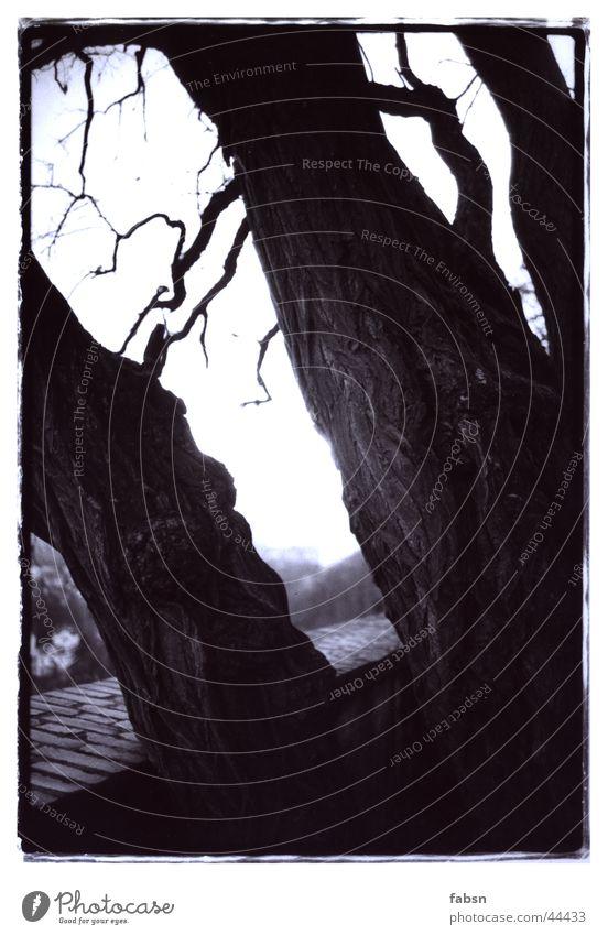 BURTON BAUM weiß Baum schwarz Berge u. Gebirge Mauer Ast Baumrinde Maserung