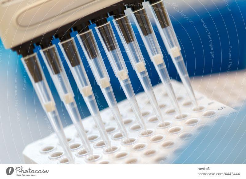 Forscher pipettiert SARS_CoV-2-Proben mit einer Mehrkanalpipette auf eine Platte Forscher, der untersucht Handschuh Frau Chemiker Gerät Kompetenz Laborantin