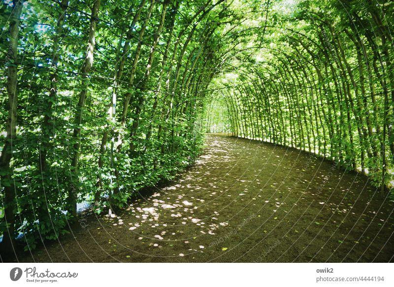 Geht seinen Gang Laubengang Blätterdach geheimnisvoll Idylle Weg Durchgang Farbfoto Natur Baum Sonnenlicht Wege & Pfade ruhig Umwelt Detailaufnahme Pergola
