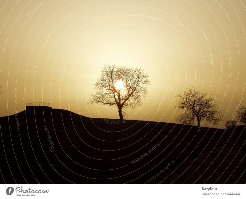 Sonnenuntergang in Baden Baum Sonne