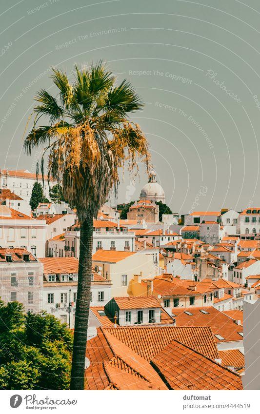 Blick über Lissabon Alfama mit Palme im Vordergrund Portugal Altbau südländisch Dach Haus Reisefotografie Dachgeschoss Architektur Stadtleben Innenhof Kamin