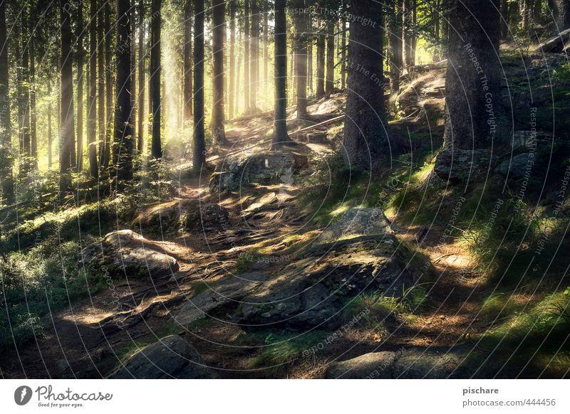 Waldzauber Natur Baum Landschaft Wald dunkel außergewöhnlich exotisch