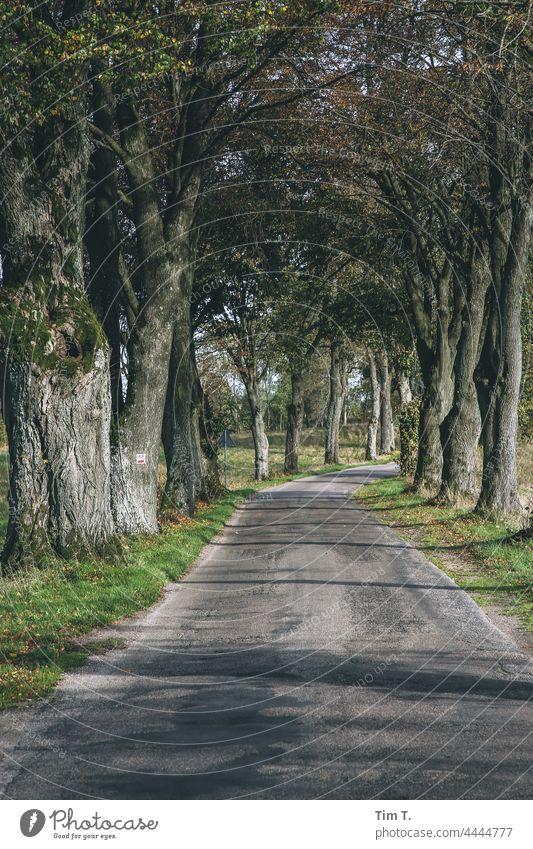 eine alte Allee in Polen im Herbst Straße Farbfoto Landschaft Baum Natur Menschenleer Wege & Pfade Außenaufnahme Landstraße Zentralperspektive Asphalt Verkehr