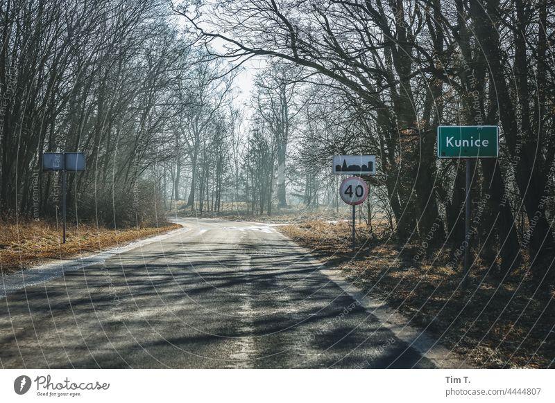 eine alte Herbstliche Landstraße in Polen Natur Menschenleer Landschaft Baum Straße Farbfoto Außenaufnahme Tag Umwelt Wege & Pfade Verkehrswege Allee Asphalt