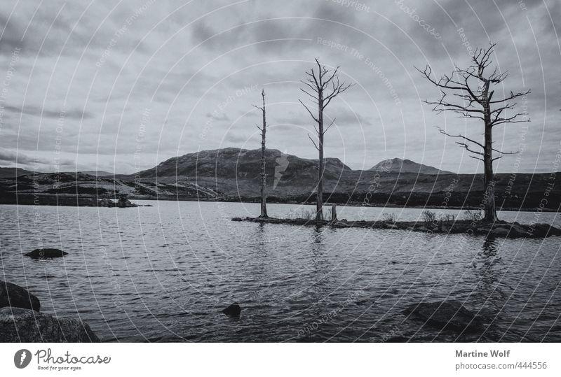 lost landscape II Natur Ferien & Urlaub & Reisen Baum ruhig Landschaft Tod See wandern Europa Ausflug Abenteuer Vergänglichkeit Hügel Schottland Großbritannien
