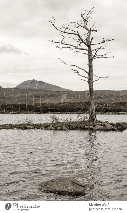 lost landscape III Ferien & Urlaub & Reisen Ausflug Abenteuer Natur Landschaft Baum Hügel See Loch Assynt Großbritannien Schottland Europa ruhig Vergänglichkeit