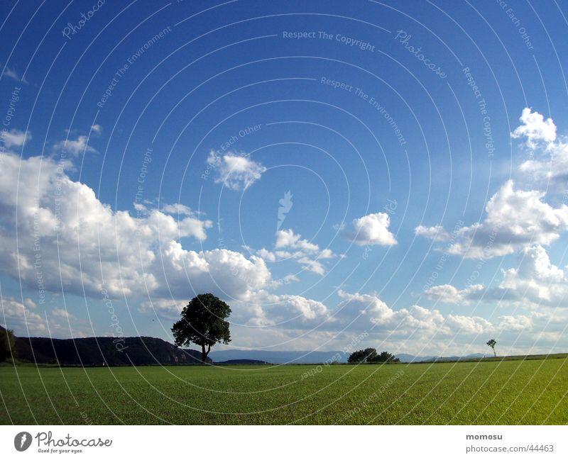 strich in der landschaft Baum Wolken Wiese Feld grün Himmel Natur blau