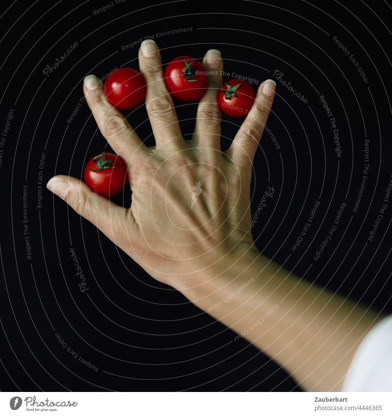 Hand mit vier kleinen roten Tomaten vor schwarzem Hintergrund Finger Arm Kunst Gemüse frisch Lebensmittel Ernährung natürlich Vegetarische Ernährung Diät