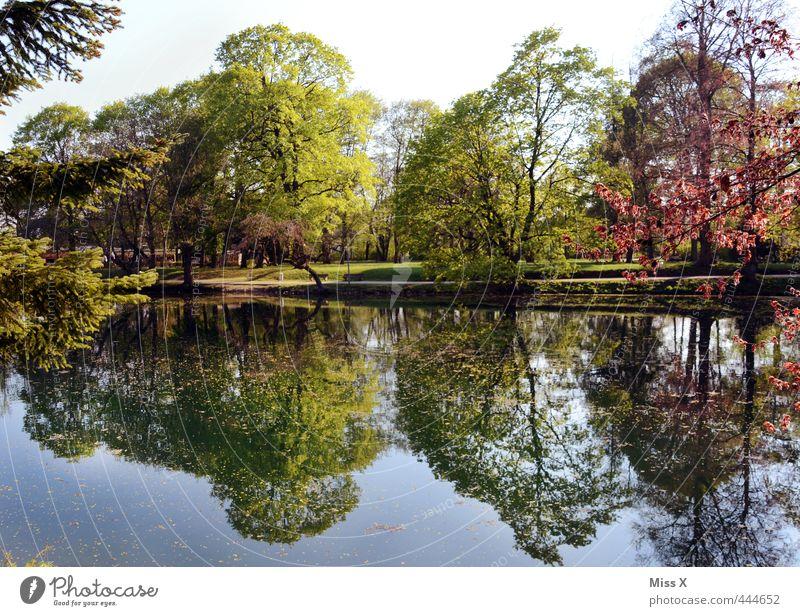 Spiegelsee Schönes Wetter Baum Park Küste See Fluss mehrfarbig Wasserspiegelung Seeufer Baumkrone Allee Farbfoto Außenaufnahme Menschenleer Textfreiraum oben