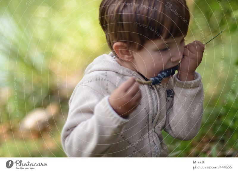 Heidelbeeren Mensch Kind Wald Spielen Junge Essen Gesundheit Freizeit & Hobby Frucht Kindheit frisch Mund Ernährung süß Appetit & Hunger Ernte
