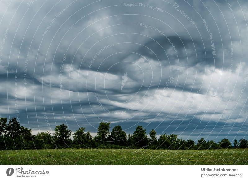 Wasserbomben Natur Landschaft Himmel Wolken Herbst schlechtes Wetter Sturm Regen Gewitter Baum Gras Wiese Feld Wald hängen bedrohlich dunkel grau grün