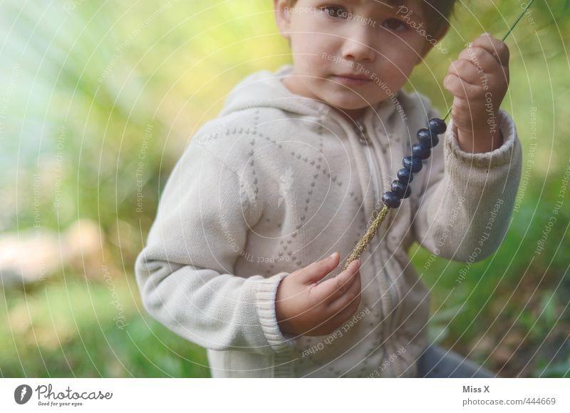 Heidelbeer-Picknick Mensch Kind Natur Sommer Wald Herbst Gesunde Ernährung Junge Spielen klein Lebensmittel Freizeit & Hobby Frucht Kindheit niedlich