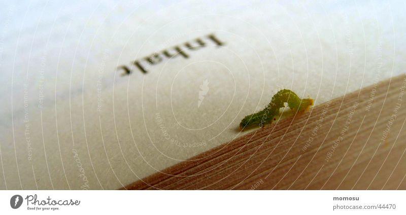 bookworm Buch lesen Freizeit & Hobby Medien Mensch Leser Wurm Raupe Inhalt