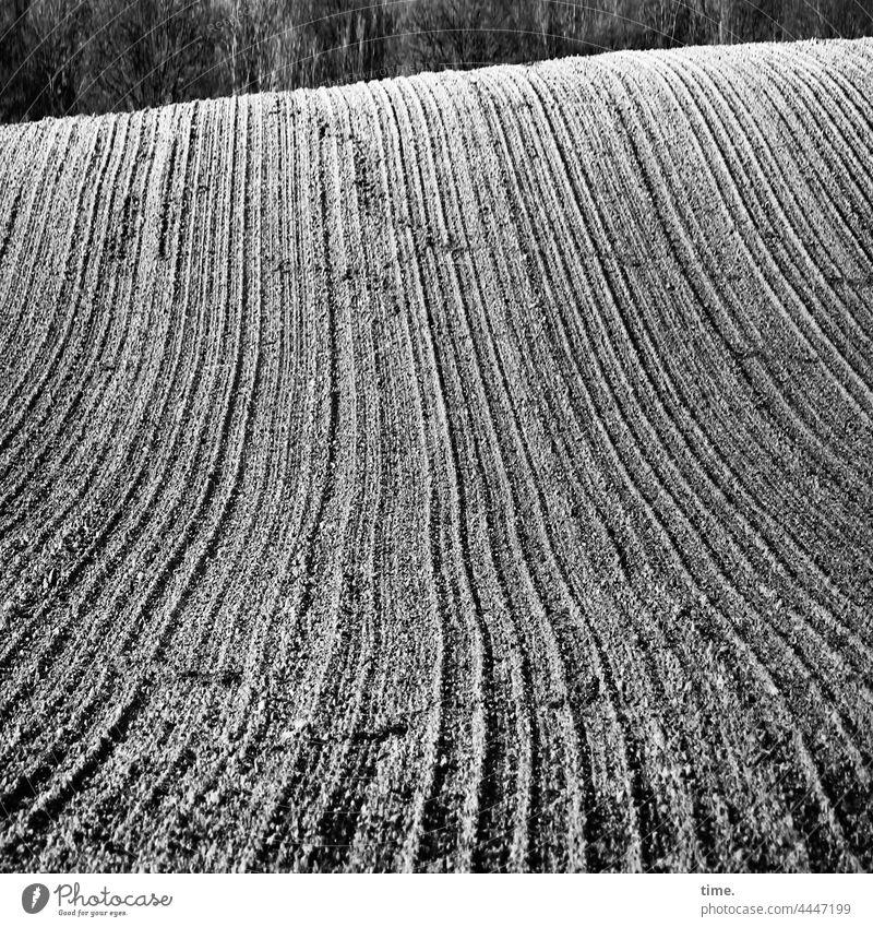Lebenslinien .150 acker landwirtschaft muster struktur oberfläche hügel furche bearbeitet wellen wald waldsaum sonnig