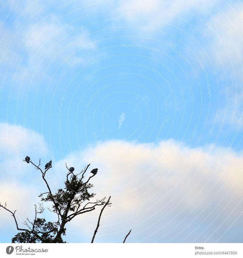 besetzt | bis auf Weiteres baum tauben vögel himmel wolken silhouette ast zweig sitzen warten pause ausruhen schauen sicherheit kahl