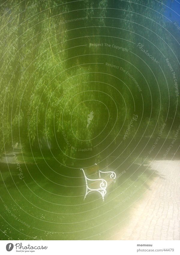 in my dreams träumen Eindruck Romantik Gartenbank Baum Bank Weide Unschärfe