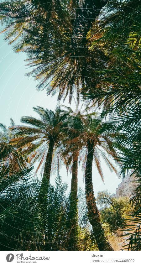 Preveli Beach Palmen Palmenwedel Palmenstrand Griechenland Kreta Urlaub Urlaubsstimmung Urlaubsfoto Urlaubsort Ferien & Urlaub & Reisen Sonnenlicht Sommerurlaub