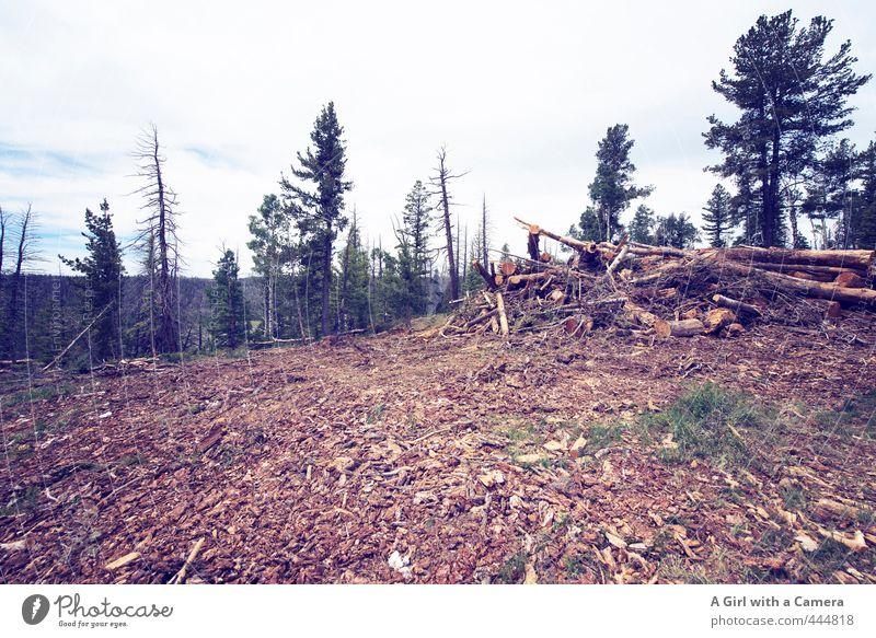 Der Geruch Umwelt Natur Landschaft Wald frisch Nadelwald Säge umgefallen umgesägt Baumrinde Baumstamm USA Utah Gedeckte Farben Außenaufnahme Menschenleer
