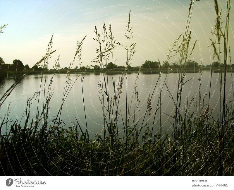 morgenstimmung Wasser Himmel Sonne Gras Teich