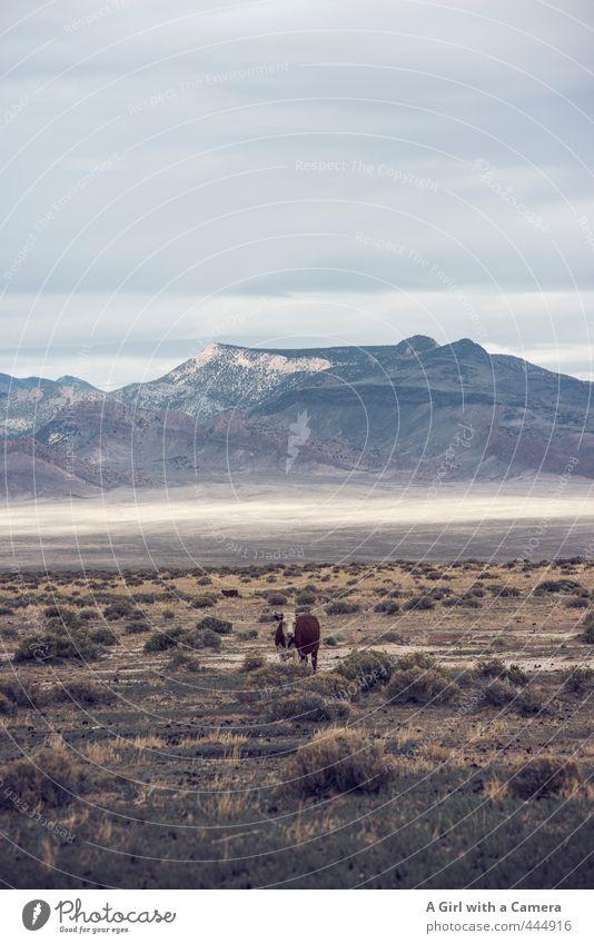 zee cow Natur Pflanze Landschaft Tier Ferne Umwelt Berge u. Gebirge Wärme Gras natürlich Felsen Horizont wild frei Sträucher Unendlichkeit