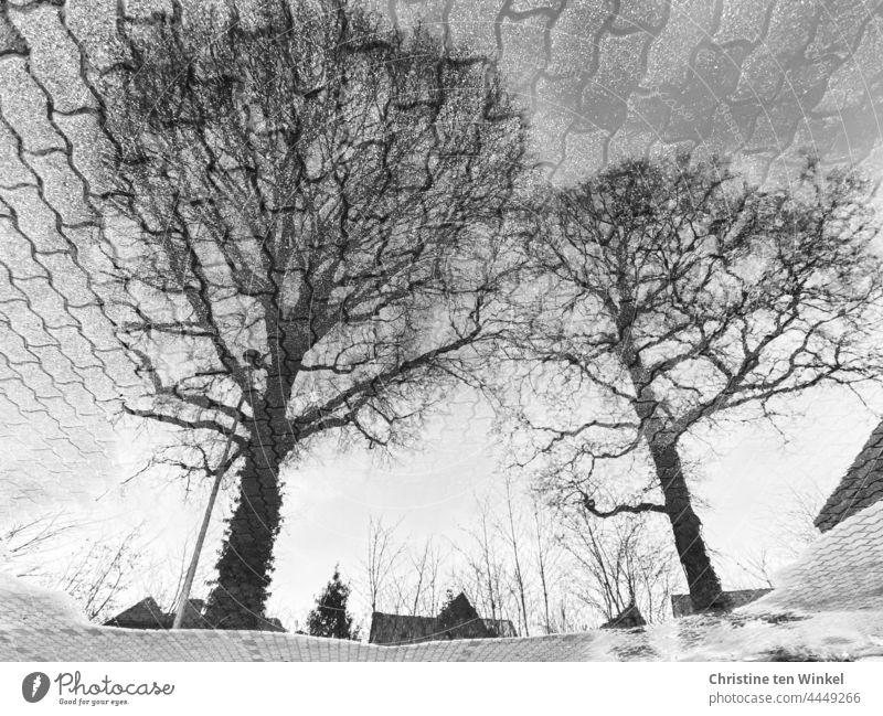 Zwei kahle Eichen spiegeln sich in einer großen Pfütze auf einem gepflasterten Parkplatz Spiegelung Pfützenspiegelung Bäume kahle Bäume Straßenlaterne