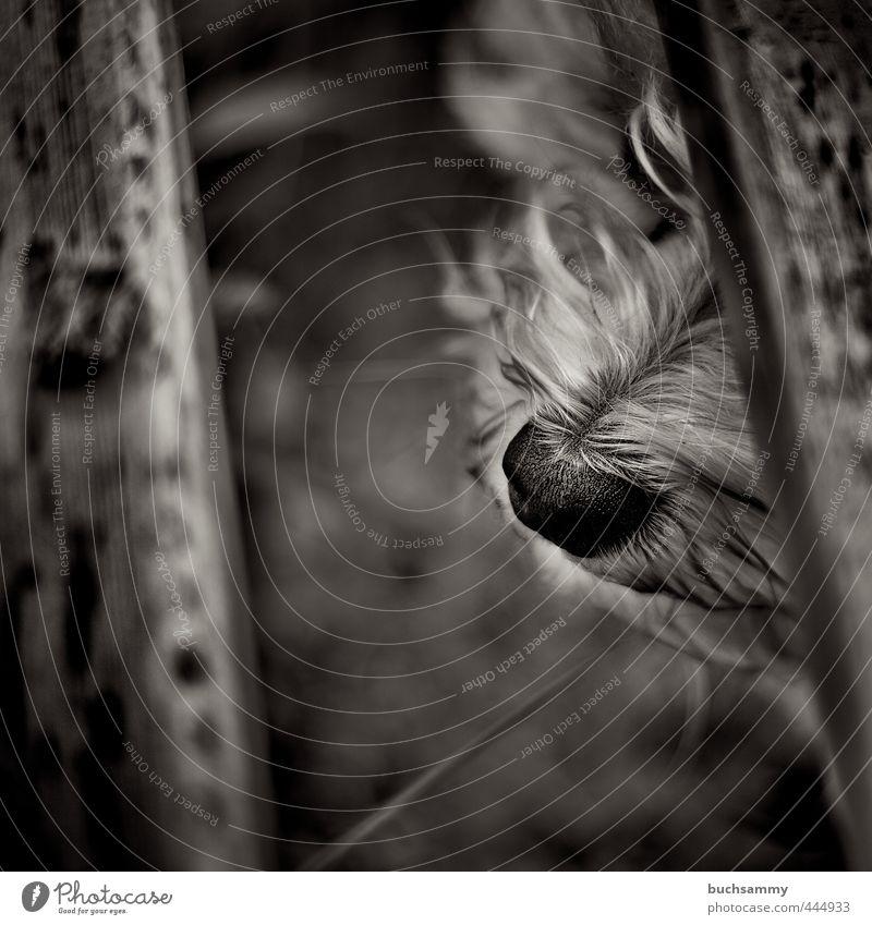 Hundenase Erholung Haustier Tiergesicht 1 warten ästhetisch dunkel schön träumen Bank Havaneser Nase Schnauze Detail Hart Schwarzweißfoto Außenaufnahme Tag