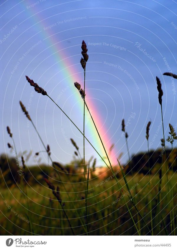rainbow Himmel blau Gras Regen Regenbogen