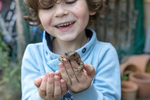 Ein kleiner Junge ist glücklich, eine Kröte in der Hand zu halten heiter Tier Kaukasier Kind konzentriert neugierig Erdkröte Finger Glück menschlich