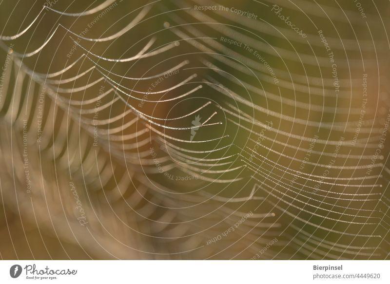 Spinnennetz mit morgendlichem Tau Webspinne Beutefang Fäden Wassertröpfchen Spinnseide Radnetz Tier Nahaufnahme Natur Wassertropfen Feuchtigkeit morgens