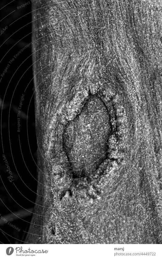 Wunden verheilen. Maserung Baumrinde verwachsen Holz Narben Verletzungen Natur natürlich sonderbar eigenartig alt Strukturen & Formen holzhintergrund ausschnitt