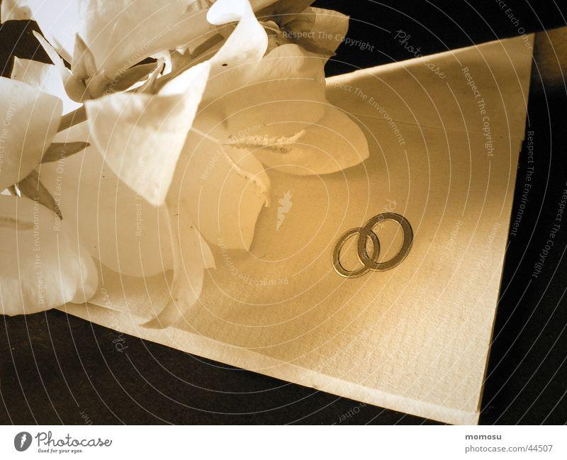 just married Liebe Glück Zusammensein Freizeit & Hobby Kreis Hochzeit Ehe Inserat Pflanze Glockenblume