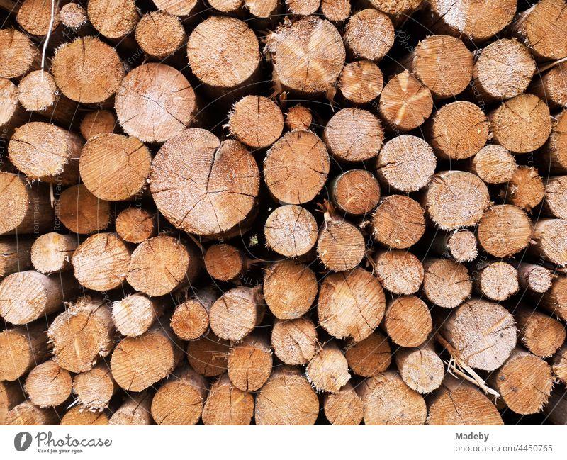 Holzstapel mit Baumstämmen nach Forstarbeiten in Oerlinghausen bei Bielefeld am Hermannsweg im Teutoburger Wald in Ostwestfalen-Lippe Stamm Baumstamm Rund Kreis