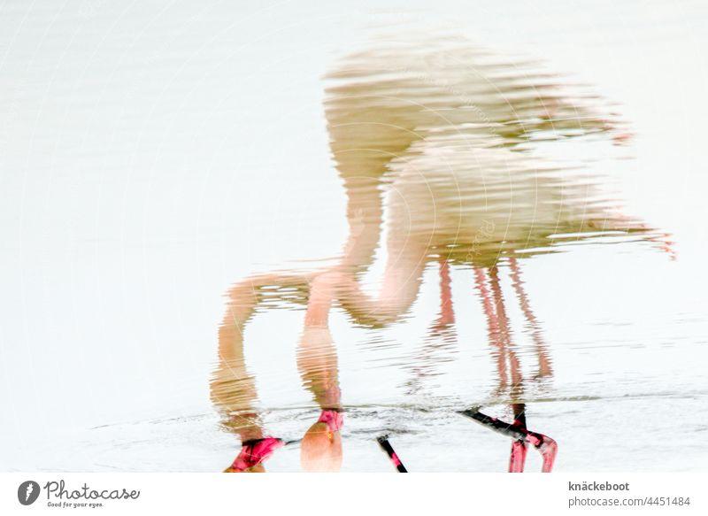 flamingos Flamingo rosa Vogel Wildtier exotisch wild Wasser See Tiergruppe Landschaft Camargue Südfrankreich Reflexion & Spiegelung Natur Frankreich