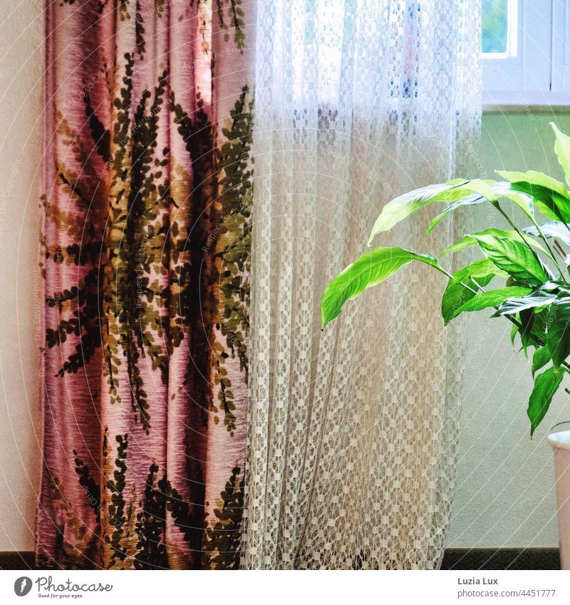 wohnliches Stillleben mit Gardinen, Ausblick, Licht und Einblatt Stilleben Zuhause Wohnen Fenster Vorhang Spitze Glücksfeder Häusliches Leben weiß