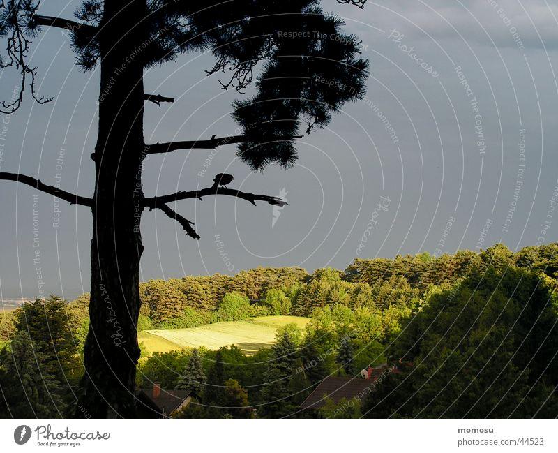 Gewitterstimmung Himmel Baum Wald Wiese Stimmung Feld Gewitter