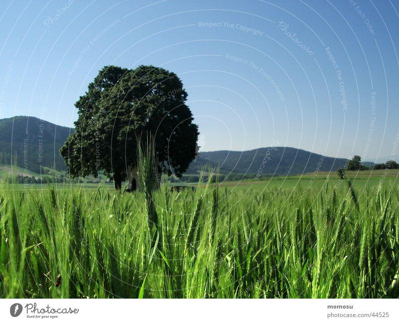 grasland Wiese Gras Hügel grün Baun Himmel blau