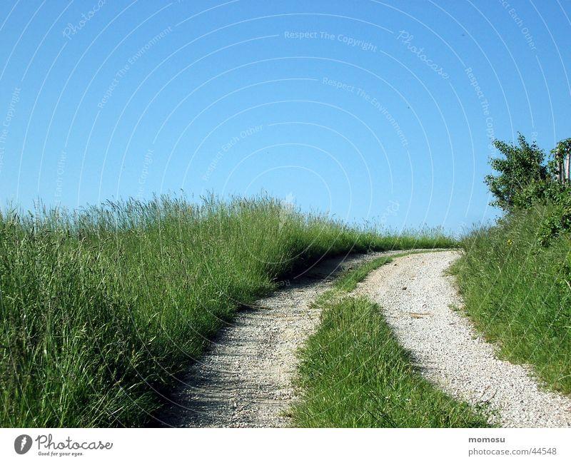 weg ins blau Wiese Gras Feld Fußweg Straße Wege & Pfade Himmel Spuren