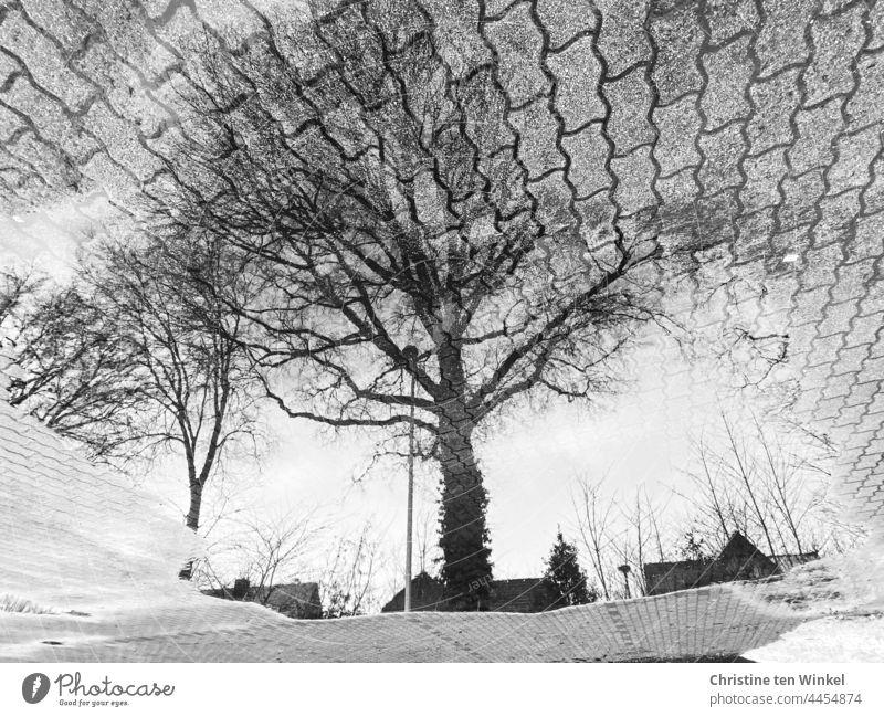 Kahle Eichen, Hausdächer und Straßenlaternen spiegeln sich in einer großen Pfütze auf einer gepflasterten Fläche Spiegelung Pfützenspiegelung Bäume kahle Bäume