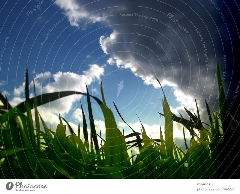 ... im gras liegen Himmel grün blau Wolken Gras Stimmung