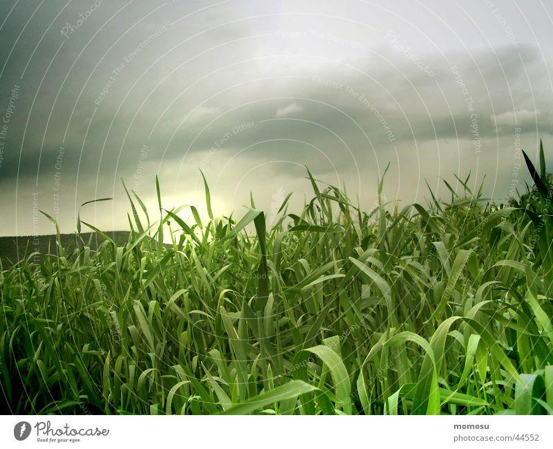 gewitterfeld Himmel Sonne grün Wolken Stimmung Feld