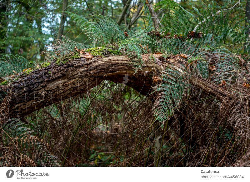 Unterholz mit Farn im Wald Natur Pflanze Moos Blatt Baum Baumstamm Gestrüpp Vergänglichkeit Verwandlung Humus Umwelt Tag Tageslicht Ast Wachstum Grün Braun