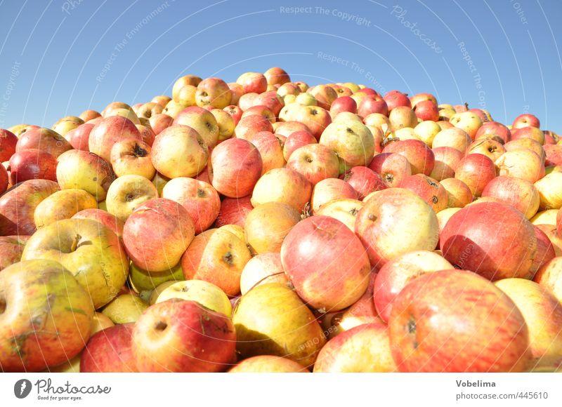 Äpfel Lebensmittel Frucht Apfel Bioprodukte Vegetarische Ernährung Landwirtschaft Forstwirtschaft Menschenmenge Herbst viele gelb rot Ernte Apfelernte obsternte
