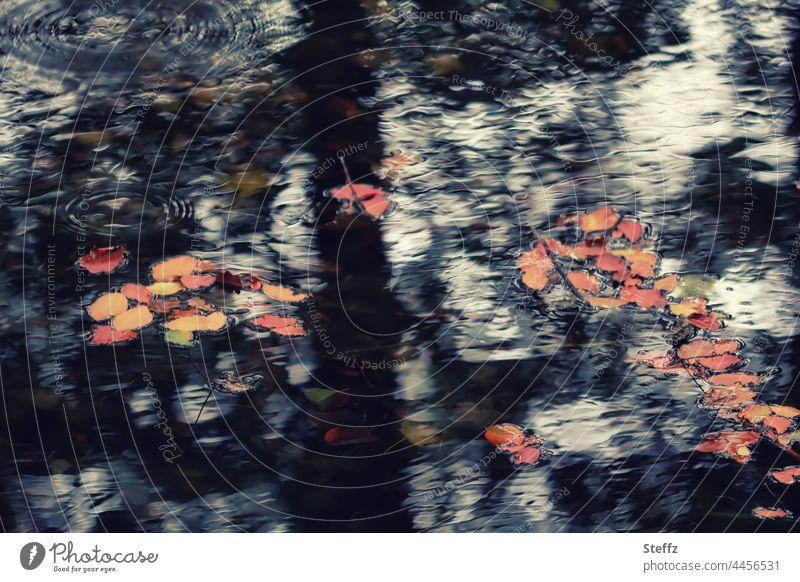 November. Seine dunklen Pfützen geschmückt. Herbstblätter fallen. Pfützenbild Haiku dunkle Pfütze Lichtspiegelung Lichtreflexe herbstlich Herbstlaub