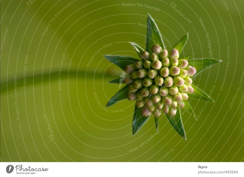 Natur blau grün rot Blume Blatt schwarz grau Garten braun rosa Blühend Italien Tropfen Blütenblatt Pollen