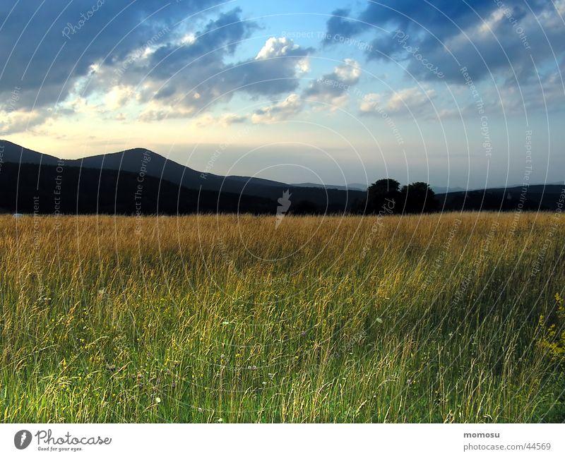 abendlicht Wiese Gras Wolken Stimmung Sonnenuntergang Berge u. Gebirge Himmel Abend