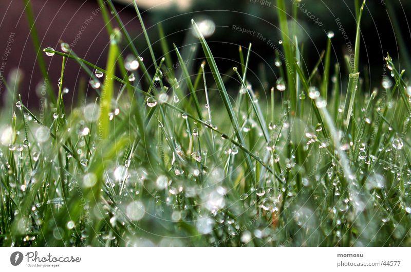 grasnass Gras Wiese grün Wassertropfen Regen Seil Unschärfe Garten Rasen