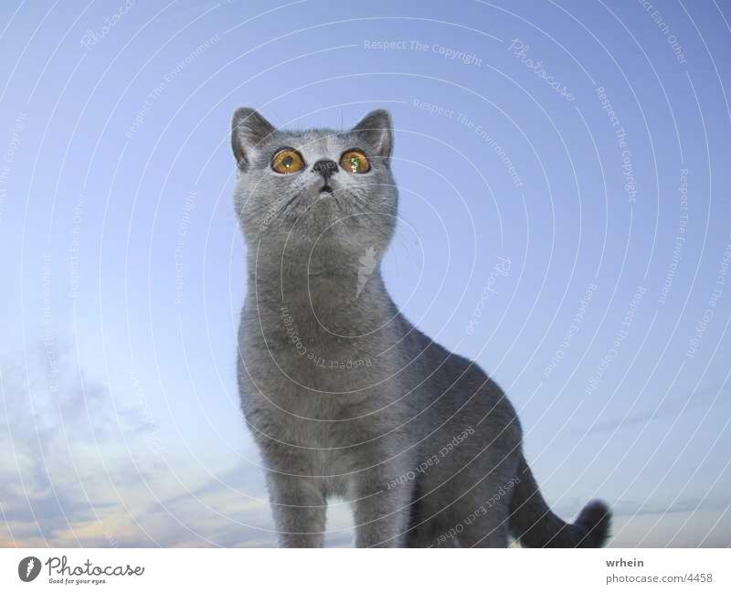 Was ist das? Katze